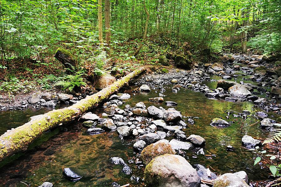 GoldenCircle Wasser Wald